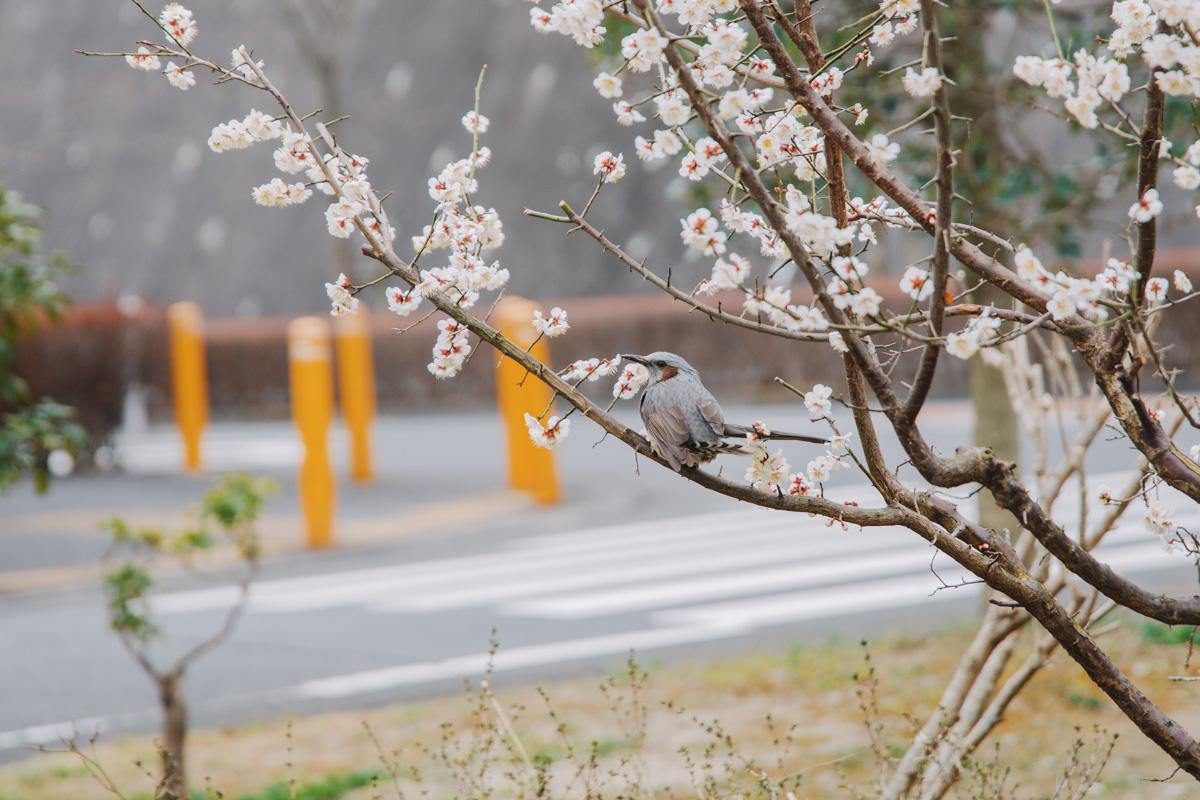 【あいクリニック中沢】ドクター亀谷のプライマリ・ケアコラム(58)